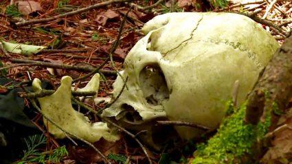 Aokigahara: Το μυστήριο του δάσους στο οποίο όποιος μπει αυτοκτονεί (Pics & Vid)