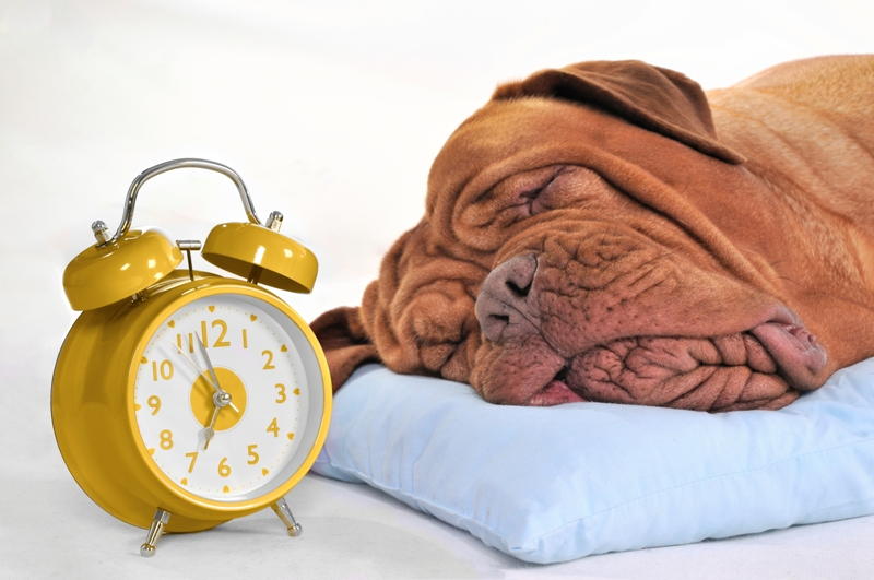 dog-with-clock