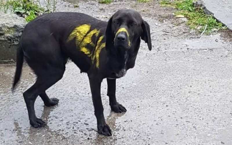 Η απάντηση ενός άστεγου στον τύπο που έβαψε τον σκύλο