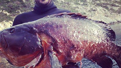 Τα πιο μεγάλα ψάρια που έχουν πιάσει ψαράδες στις ελληνικές θάλασσες (Pics & Vid)