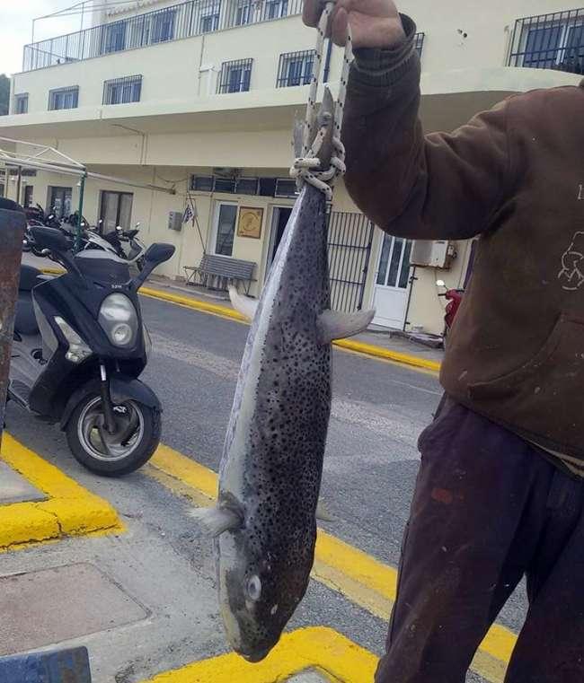 φονικά ψάρια