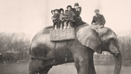 Jumbo: Η αληθινή ιστορία του μυθικού ελέφαντα – σταρ με το τραγικό τέλος