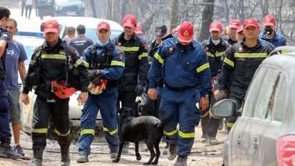 Πώς μπορείτε να βοηθήσετε ανθρώπους και ζώα που έχουν πληγεί από τις φωτιές