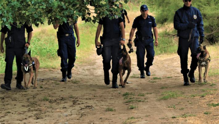 182c30e27122 Ανιχνευτές ναρκωτικών και εκρηκτικών  Η εκπαίδευση της επίλεκτης ομάδας  σκύλων της Ελληνικής Αστυνομίας