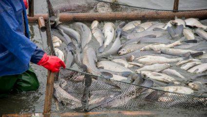Κρυφτό με το λιμενικό και το θάνατο: Το απαγορευμένο ψάρεμα που ακόμα κάνει θραύση στα νησιά