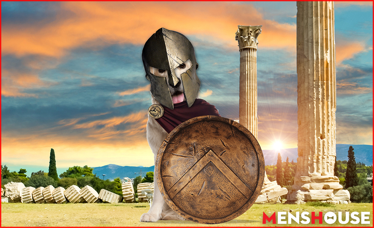 Αγνώριστα: Δείτε πώς βγήκαν μετά το μάθημα Αρχαίων τα 8 σκυλιά του Αδώνιδος (Pics)