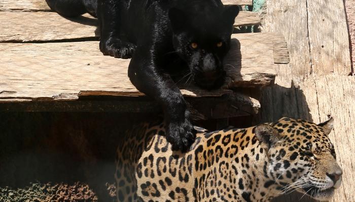 Προς εξαφάνιση θα έπρεπε να οδεύουν τα κλουβιά και όχι τα ζώα που έχουμε κλείσει αναίτια εκεί μέσα