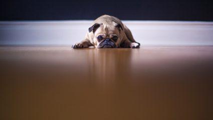 «Απαγορεύονται τα κατοικίδια»: Ψάχνεις σπίτι κι έχεις σκύλο; Καλωσήρθες στον κόσμο του παράλογου