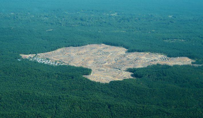 Το έλαιο που βάζουμε στις τροφές και καταστρέφει τον πλανήτη παραπάνω από το πετρέλαιο