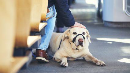 Πρέπει να έχεις μηδέν κρίση για να σταματάς τον συρμό και να απαιτείς αποβίβαση ενός σκύλου