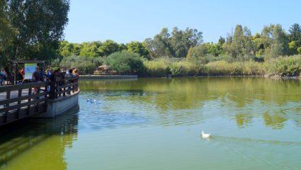 Πάρκο Τρίτση: Ο καθρέφτης της ντροπής μας