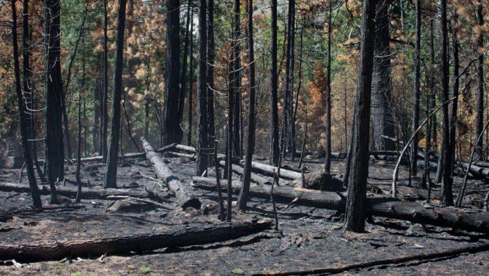 Για την Παναγία των Παρισίων δακρύσαμε και κάναμε δωρεές. Για το δάσος του Αμαζονίου που καίγεται ολοσχερώς;