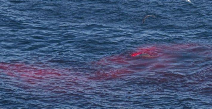 Υπόθεση «Γαρυφαλλιά»: Η απάνθρωπη απόφαση του Έλληνα καπετάνιου να ρίξει 11 λαθρεπιβάτες στους καρχαρίες