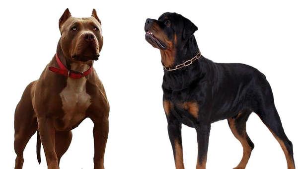 Δεν υπάρχουν σκύλοι-δολοφόνοι, υπάρχουν ανεύθυνοι ιδιοκτήτες...