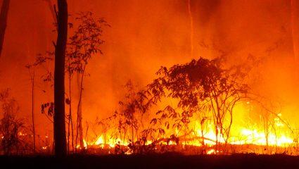 Τα καμμένα ζώα στην Αυστραλία κάηκαν από το δικό μας χέρι