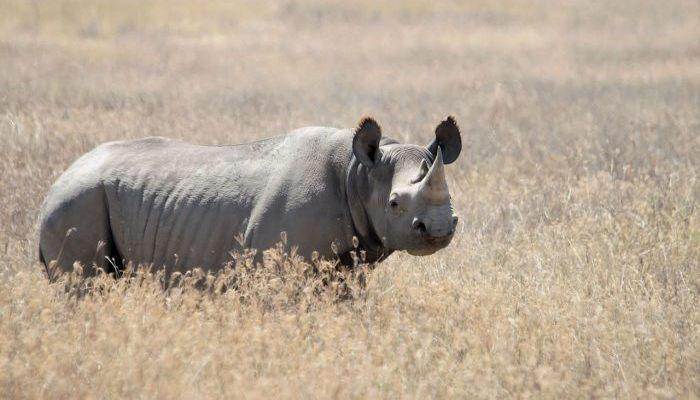 Δεν θα τα δουν ποτέ τα παιδιά σου: 5 γνωστά και υπερήφανα ζώα που εξαφανίστηκαν για πάντα (Pics)