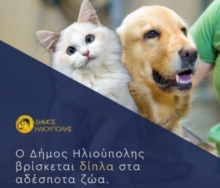 Δείχνει το δρόμο: O Δήμος Ηλιούπολης δίνει το παράδειγμα στη φροντίδα των αδέσποτων ζώων