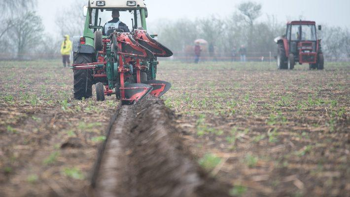 Μικρό αρχικό κεφάλαιο, χωρίς πάγια έξοδα: Η καλλιέργεια που αποφέρει εισόδημα 900€ το κιλό είναι η πιο έξυπνη επένδυση