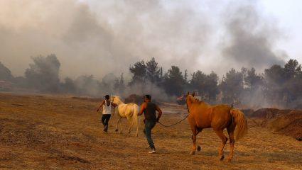 Τα αθώα θύματα: Η άνιση μάχη των πυροσβεστών για να σωθούν τα ζώα απ' τις φλόγες (Vid)